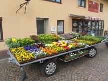 Blumenwagen vorne 4